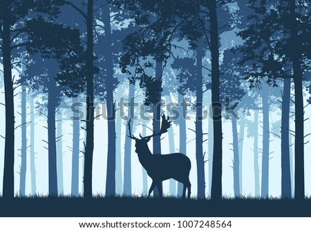 blue coniferous forest with a