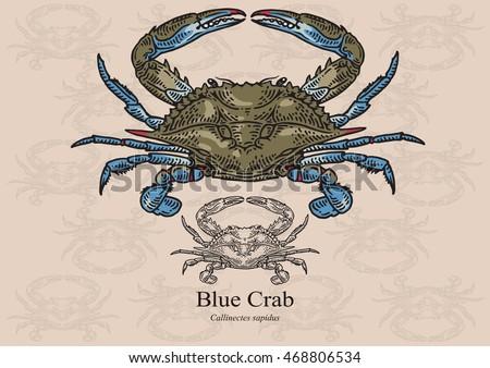 blue crab vector illustration