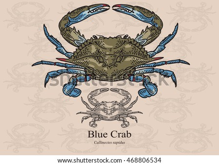 Blue crab. Vector illustration with refined details and optimized stroke that allows the image to be used in small sizes (in packaging design, decoration, educational graphics, etc.)