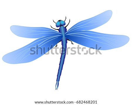 blue dragonfly on white