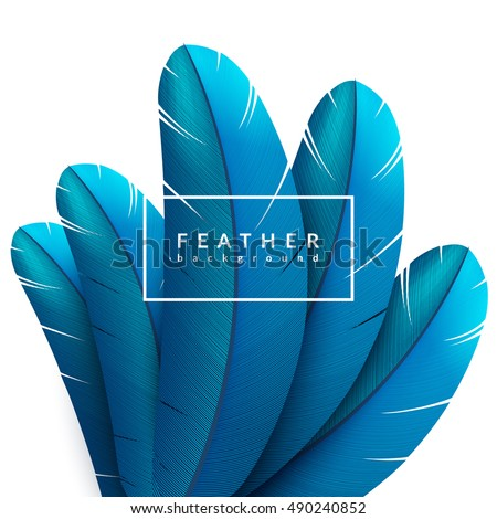 blue feather background exotic