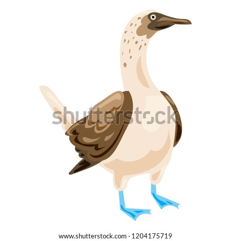 blue footed booby icon cartoon