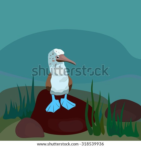 blue footed booby standing on