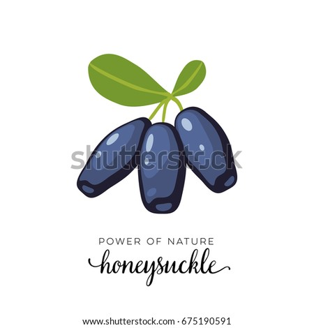 Blue honeysuckle berry flat icon with inscription colorful vector illustration of eco food isolated on white.