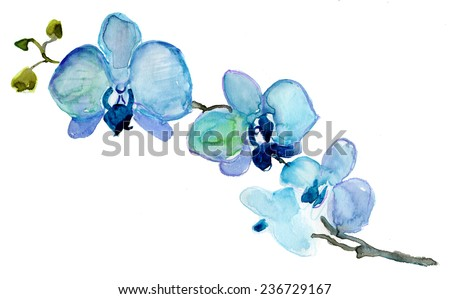 blue orchid flower watercolor