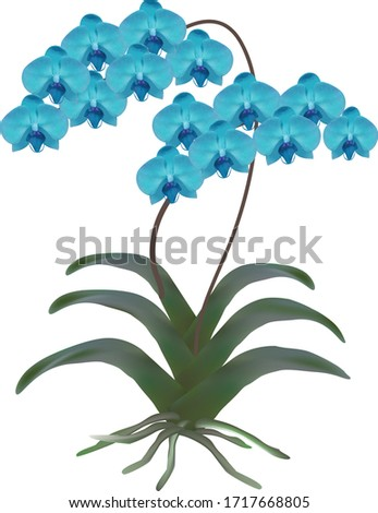 blue orchid with two branches