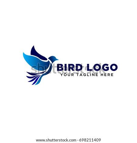 blue pigeon flying bird