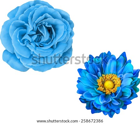 blue rose and mona lisa flower
