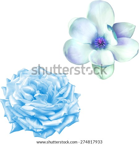 blue rose flower and blue