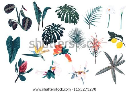 blue tropical set  palm leaves