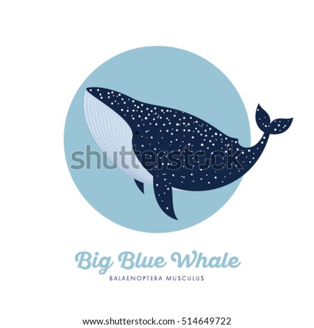 blue whale in specks in the