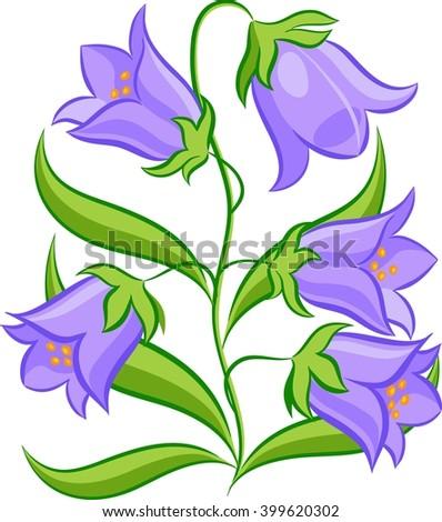 bluebells on white background