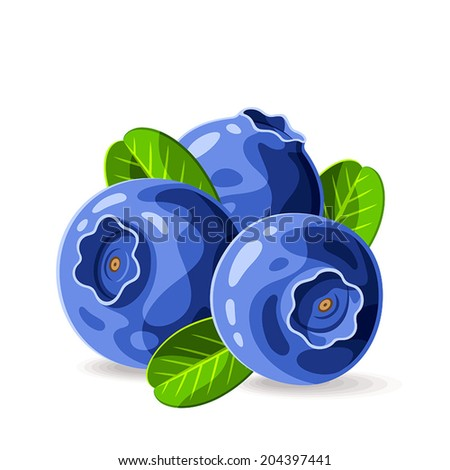 Blueberries and leaves isolated on white 2. Vector illustration. Composition of the three berries.