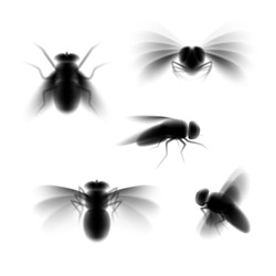 Blurred fly silhouette isolated on white, black fly in flight and sitting still from various angles of view, a set of unfocused vector illustrations of pest insect