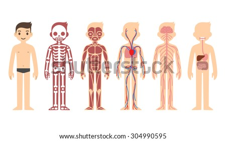 body anatomy chart  skeletal
