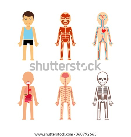 body anatomy vector