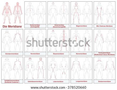 body meridians   german