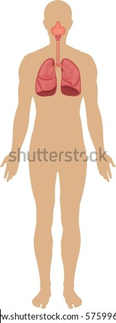 Body system - stock vector