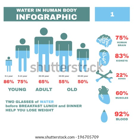 body water infographic. vector