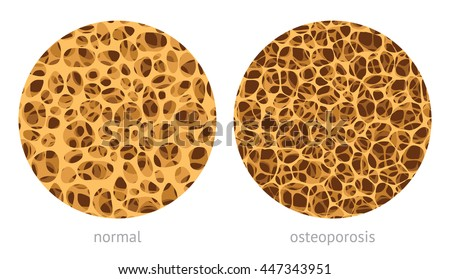 bone spongy structure vector