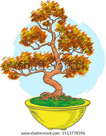 bonsai in a pot japanese art