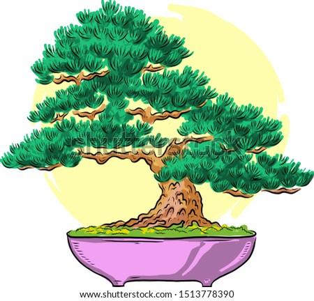 bonsai in a pot mini tree