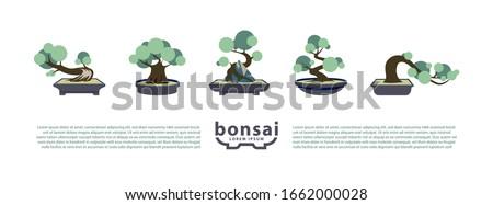 Bonsai trees and bonsai pots set. Vector Flat Icons with Bonsai Styles. Сток-фото ©