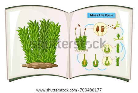book showing life cycle of moss