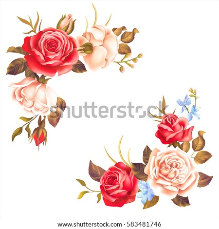 Borders with white and red roses on white background. Vector illustration.