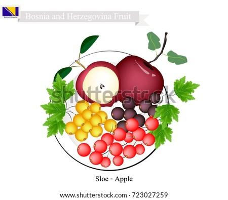 bosnian fruit  illustration of