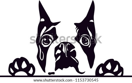 boston terrier dog breed love