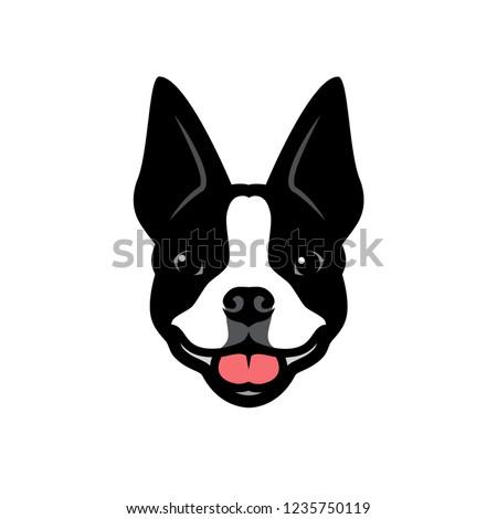 boston terrier dog   vector