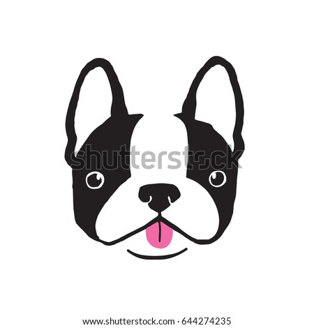 boston terrier face quirky
