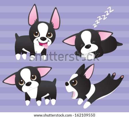 boston terrier puppies  four