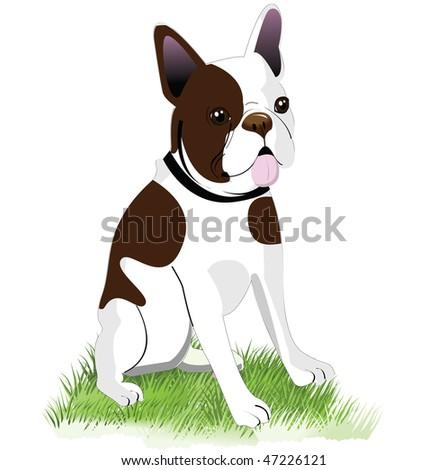 Boston Terrier vector illustration