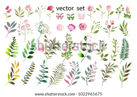Botanical collection. Herbs, leaves, flowers. A set of decorative elements.Vector illustration. Variety of shapes and colors.