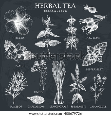Botanical collection of hand drawn herbal tea ingredients. Decorative vector set of vintage medicinal herbs and spice sketch isolated chalkboard.
