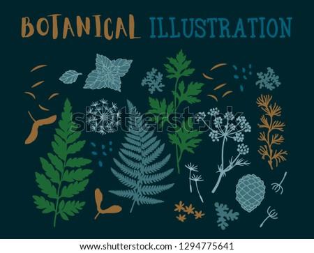botanical illustration plants