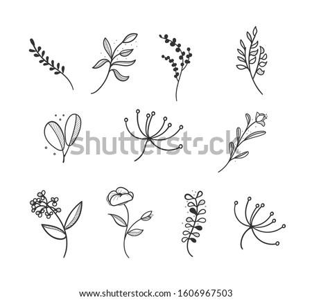 Botanical logo outline drawing. Minimal floral vintage style. Doodle plant vector illustration. Pure nature organic brush. Line drawing. Botanical floral badge collection. Eco product emblem set.