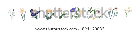 Botanical set of garden floral plants. Gorgeous clematis, craspedia, daffodil, irises, peony, poppy, tulip and pansy flowers isolated on white background. Colorful flat vector illustration