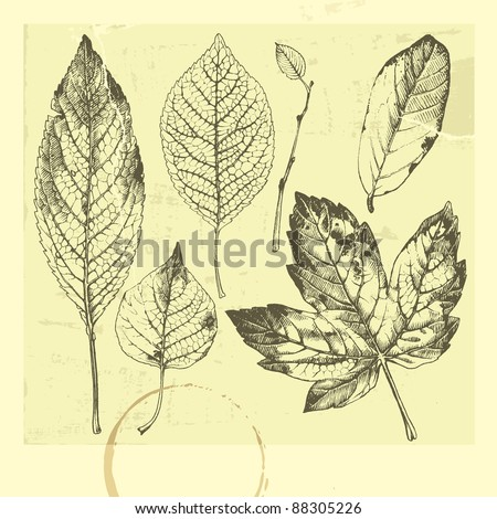 Botanical set: vintage highly detailed hand drawn leaves.