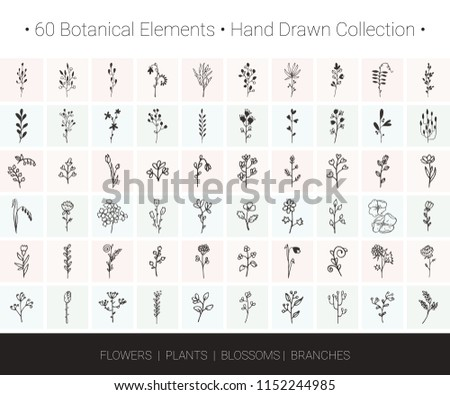 Botanical vector design elements. Branch, flower, herb, leaf, bud icons for floral wreaths, borders, logo designs, wedding invitation, greeting card, textile print. Hand drawn illustrations collection