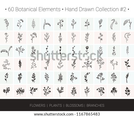 Botanical vector design set. Branch, flower, herb icons for floral wreaths, borders, logo designs, wedding invitation, flyers, greeting card, textile print. Hand drawn botanical illustrations clipart.