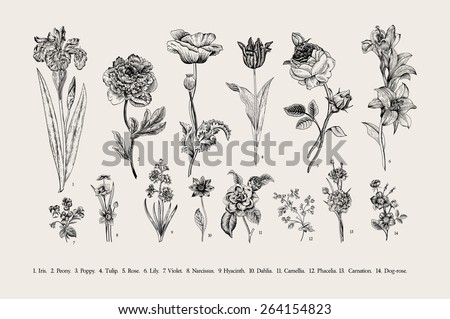 Botany. Set. Vintage flowers. Black and white illustration in the style of engravings. - Shutterstock ID 264154823
