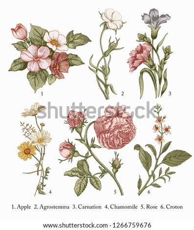 Botany. Set vintage medical realistic isolated flowers herbs. Nature baroque. Drawing engraving sketch retro. Vector background victorian Illustration. Apple Agrostemma Carnation Chamomile Rose Croton