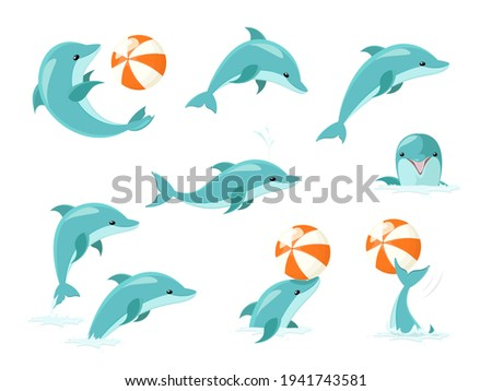 bottlenose dolphin performing