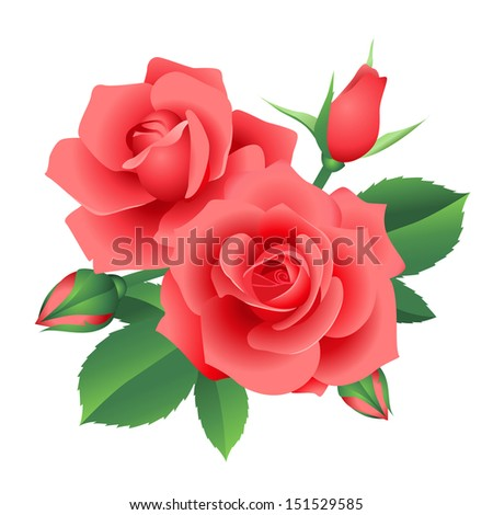 Bouquet of red roses blossoms. Illustration isolated on white