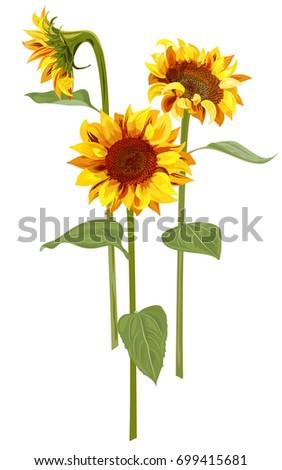 bouquet of three sunflower