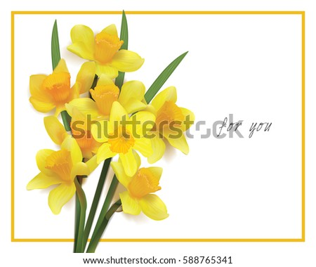 bouquet of yellow daffodils on