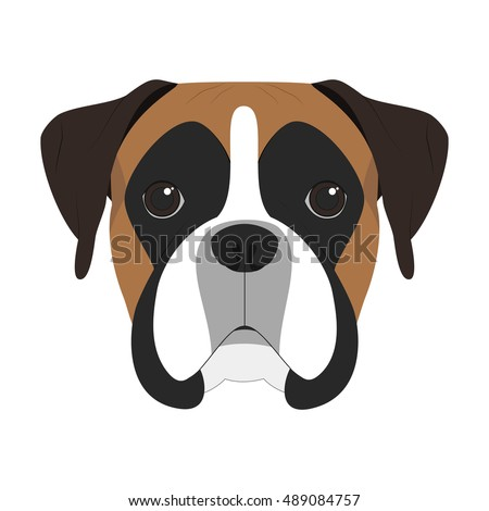 Boxer dog isolated on white background vector illustration